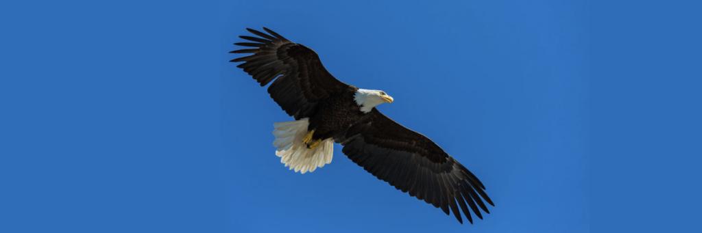 eagle-1200x400-001